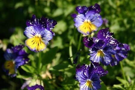Photo Blue Purple Flowers