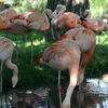 Photo: Flamingoes