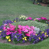 Photo: Front lawn flowerbed