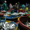 Photo: Fish market