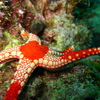 Photo: Necklace Sea Star