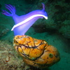 Photo: Nudibranch