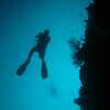 Photo: Diver