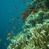 Photo: Reef and fishes