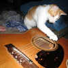 Photo: Guitar playing cat