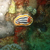 Photo: (keyword nudibranch)