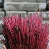 Photo: (keyword incense)