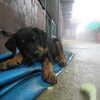 Photo: Puppy
