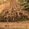 Photo: (keyword roots)