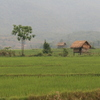 Photo: Rice fields