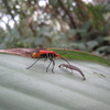 Photo: Cool red bug