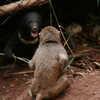 Photo: Monkey vs bear