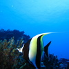 Photo: (keyword angelfish)