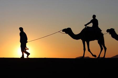 Photo: Camel silhouettes