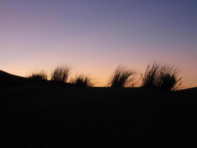 Photo: Grass sunset